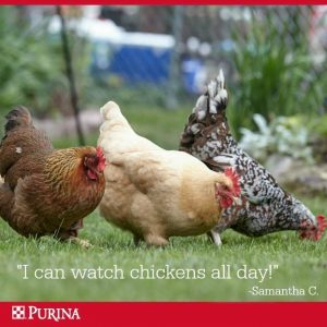 Purina Poultry Feeds